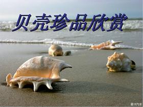在海边捡过贝壳吗?捡过这些精美贝壳吗?