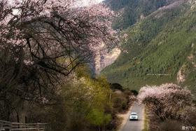 雪山与花的故事——威廉他爹#撼路者长期使用报告#之:南迦巴瓦