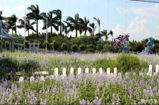 假期美景南沙百万葵园、十九涌,享受美食自驾丽贝岛美食图片
