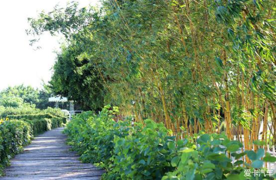 假期美食南沙百万葵园、十九涌,享受自驾美景乐队美食黑陕西撒图片