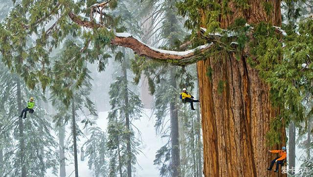 《国家地理》摄影师为3200年前巨型红杉树拍摄肖像