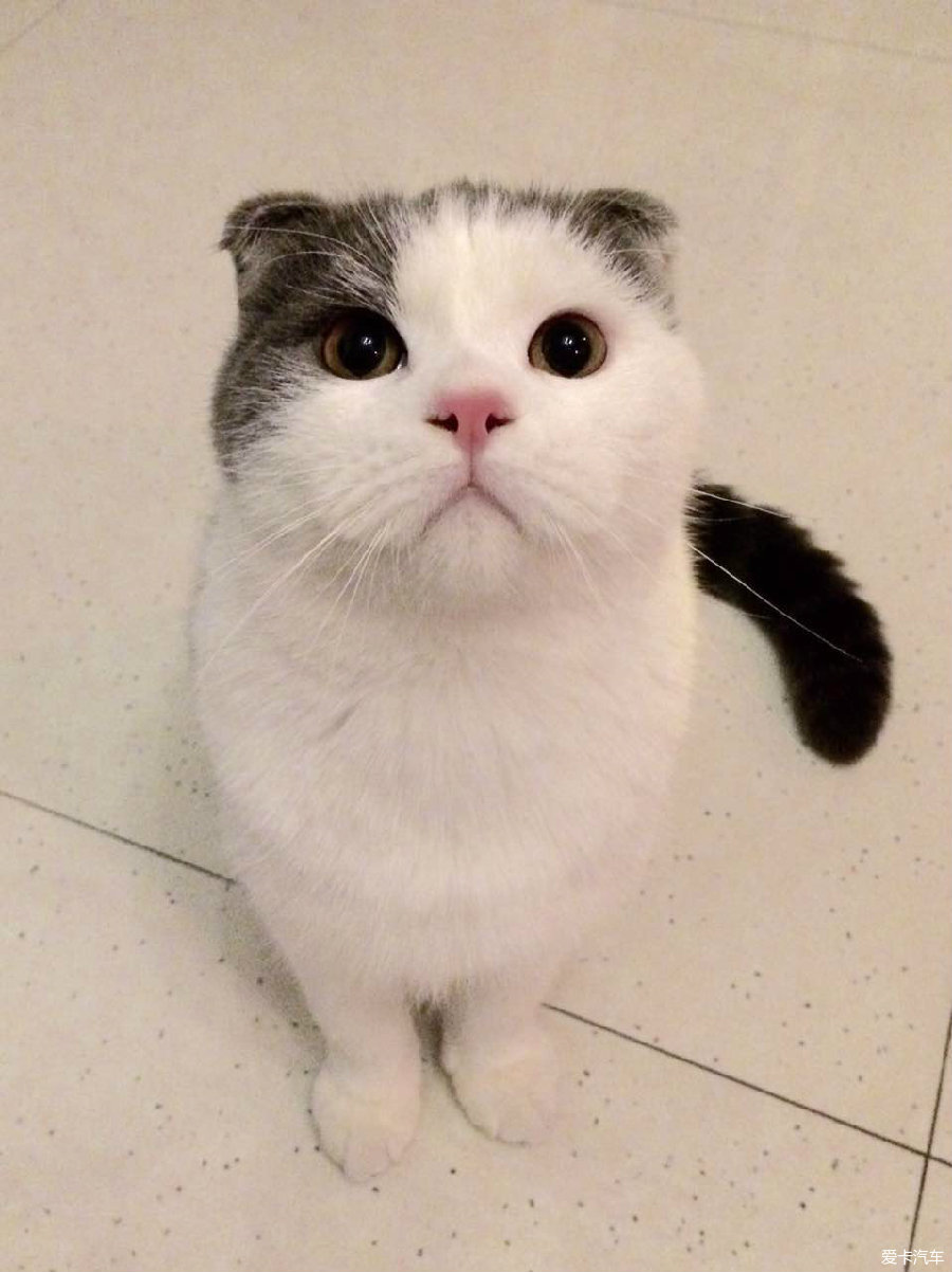 壁纸 动物 狗 狗狗 猫 猫咪 小猫 桌面 900_1202 竖版 竖屏 手机