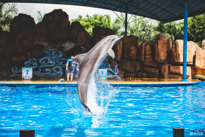 周末的动物园——小小的动物大大的我