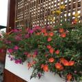 休身养花了。