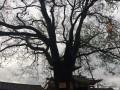 一颗古树,据说几百年的历史了!