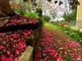 南半球之春,约会花红柳绿的新西兰南岛(国庆新西兰自驾游记)