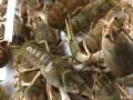 欧洲的清水小龙虾