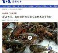 美国之音:揭秘美国路易斯安那州水煮小龙虾