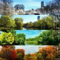 波士顿的四季