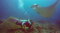 巴厘岛潜水游记