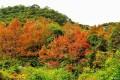 2016大化山红叶