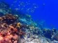 马尔代夫鲁滨逊岛,浮潜天堂+新加坡樟宜机场免费一日游