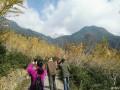 去年11月份看银杏树拍的照片