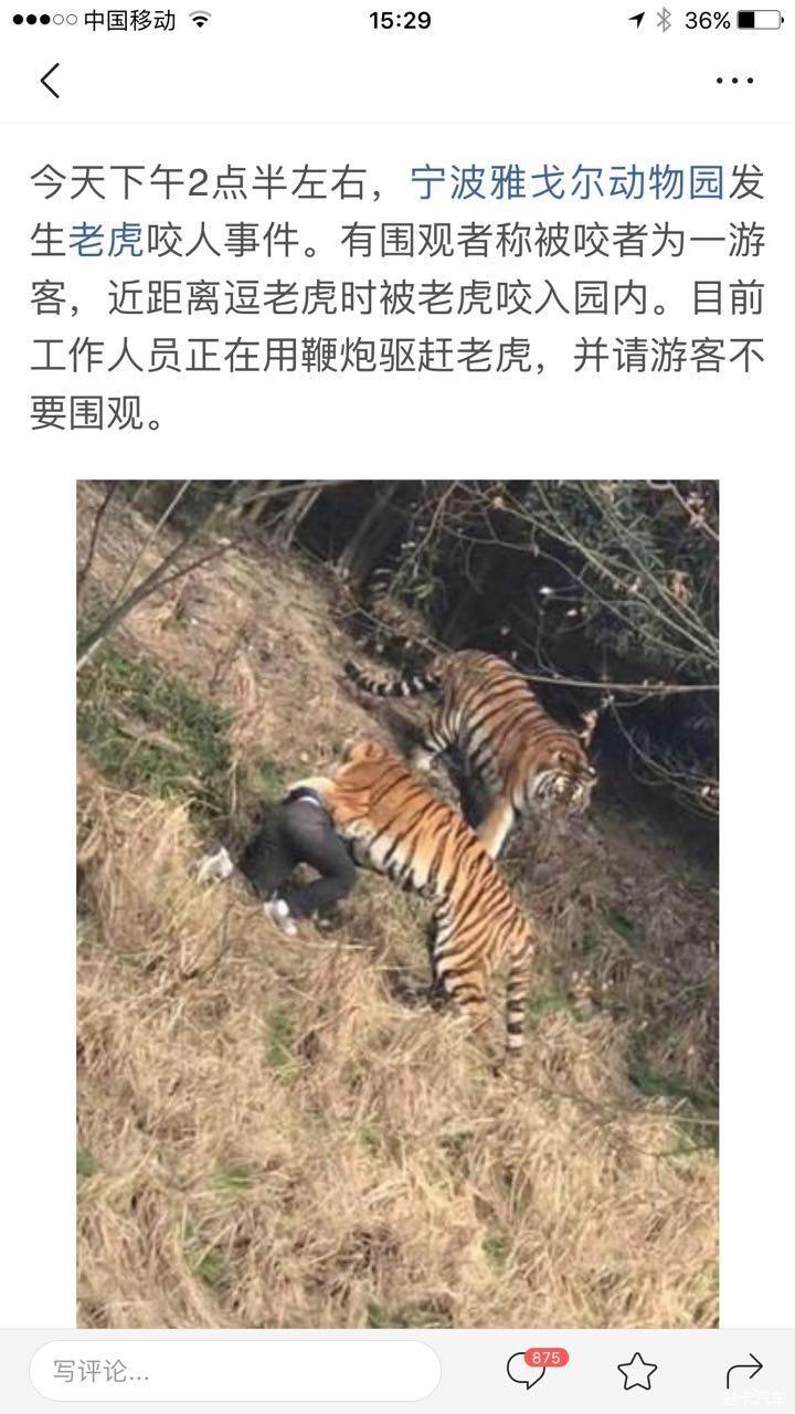 > 宁波动物园老虎咬人