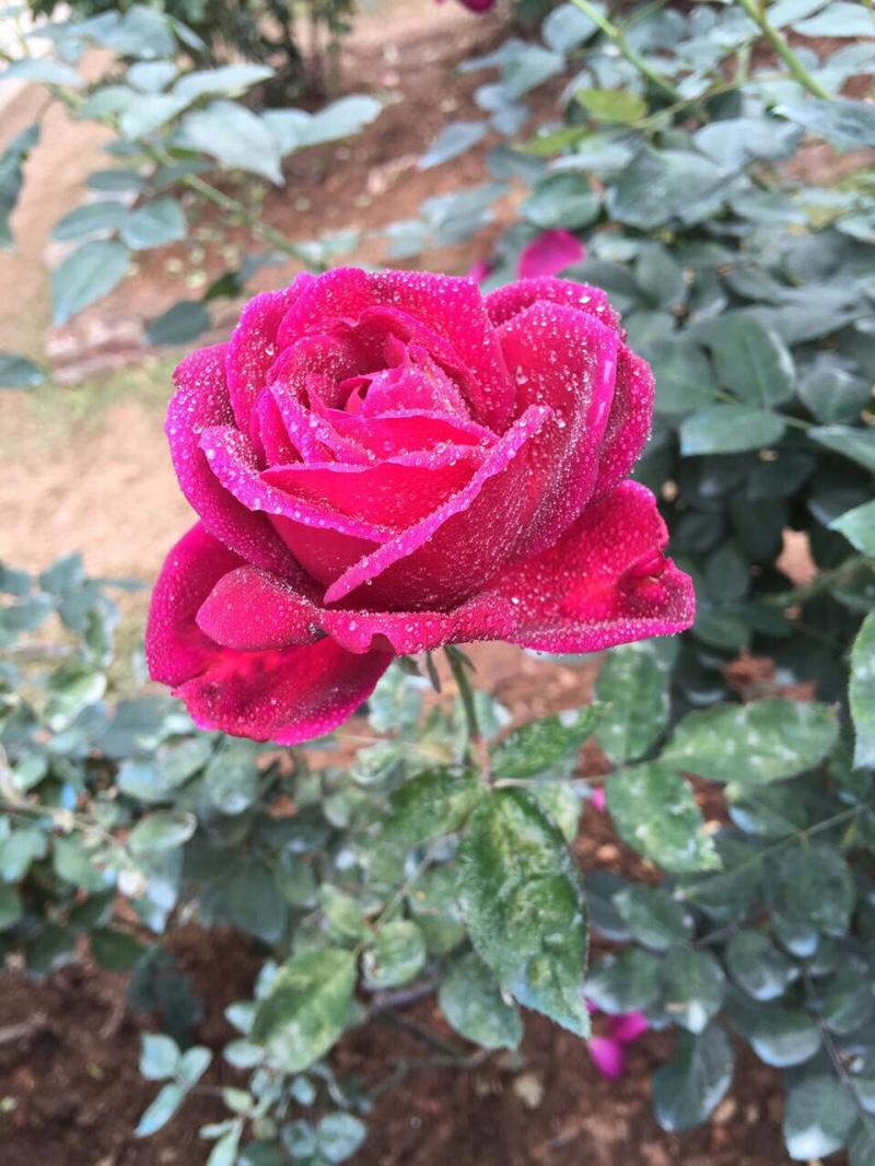 一种花也可以五颜六色小时候家门前_深圳汽车