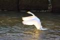 春节出游--天鹅之旅