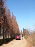 连续三年春节自驾彩云之南,这次有什么不同?