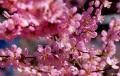 三月底西藏落地自驾,林芝看桃花、纳木错、羊卓雍错