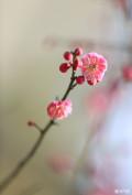 春暖花开,色起来
