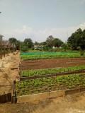 柬埔寨农场纪实