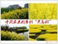 航拍中国最美油菜花花海,美得不要不要的,就在邻省江苏.