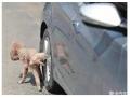 学会这3招,狗狗再也不会在爱车的轮胎上嘘嘘啦!