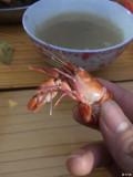 这个迷你小龙虾边正点呢