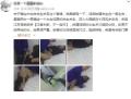 4名嫌疑人胁迫强奸少女拍视频3人为未成年人