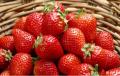 海南水果上市时间表。有你爱吃的吗?