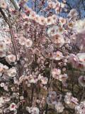 自驾游―春天里的植物园