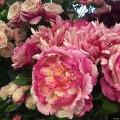 花店的花花