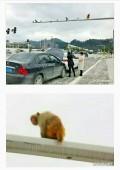 男司机:啊红灯!停!女司机:哇猴宝宝!好可爱!咣……