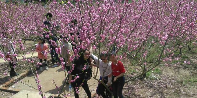 三江园看桃花品美食