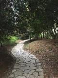 春风十里走路回家