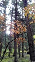 九寨沟,浑然天成的秋色长廊
