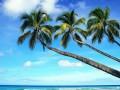 海南椰树!一个字美!