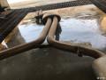 出S5Awe排气及原厂避震