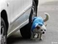 狗狗朝轮胎撒尿,到底要不要防
