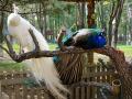 【实拍】带着外孙女逛野生动物园