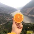 一个让顾客疯狂,心痛的橙子,真的有必要尝尝!再不尝就真的晚了