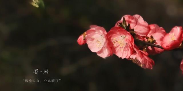 【斟心】【丁酉春之碧桃】