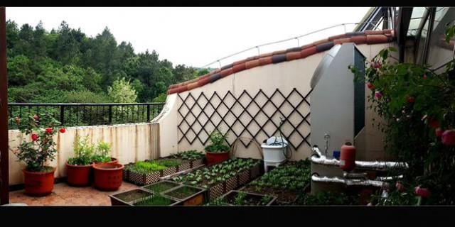露台菜园。。。。