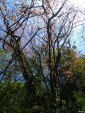 走近成都崇州鸡冠山原始森林1