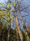走近成都崇州鸡冠山原始森林2
