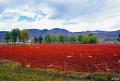 川藏线自驾游稻城+亚丁+羊湖相约大美西藏拼车组队友
