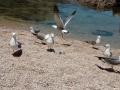 去威海看海鸥吧,绝对不后悔