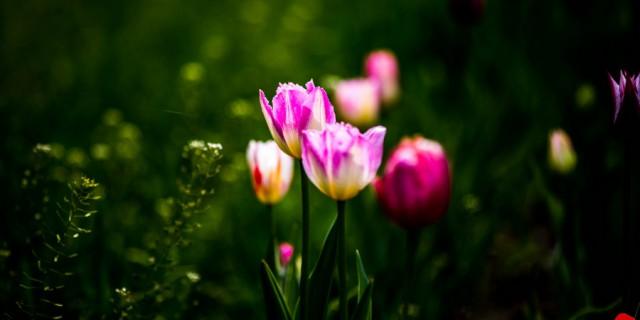植物园赏花随拍