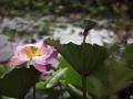 鲜花摄影分享