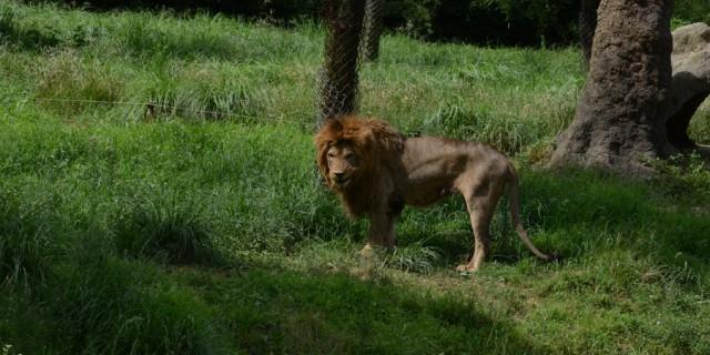 周末不想宅在家,带儿子去了野生动物园