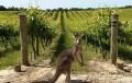澳洲酒庄之旅